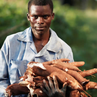 Sector Analysis: The Commercialization of Cassava in Ghana and it's Potentially Positive Socio-Economic Benefits