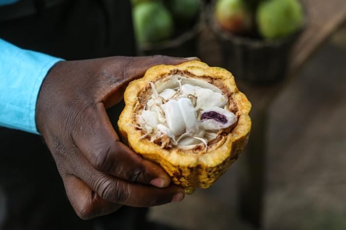 Niche-Ghana_cacao2