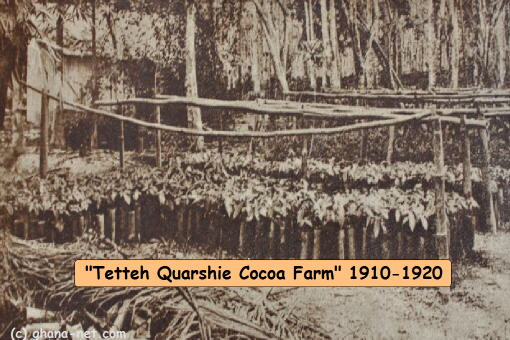 tetteh_quarshie_cocoa_farm